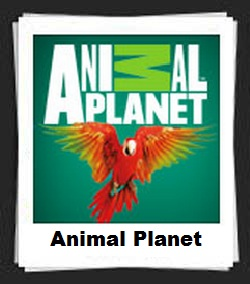 100 Pics Animal Planet Answers