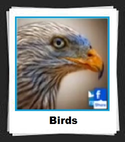 100 Pics Birds Answers