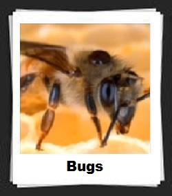 100 Pics Bugs Answers