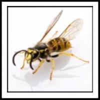 100 Pics Bugs Level 1
