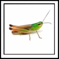 100 Pics Bugs Level 2