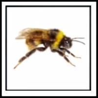 100 Pics Bugs Level 3