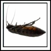 100 Pics Bugs Level 4