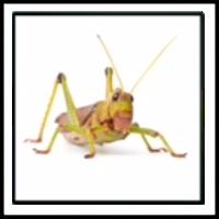 100 Pics Bugs Level 6