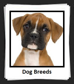 100 Pics Dog Breeds Answers