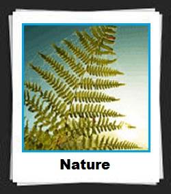 100 Pics Nature Answers