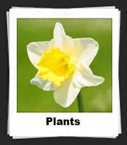 100 Pics Plants Answers