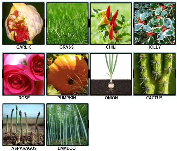 100 Pics Plants Level 1-10 Answers