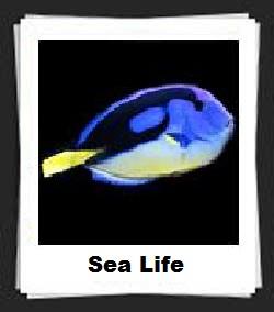 100 Pics Sea Life Answers