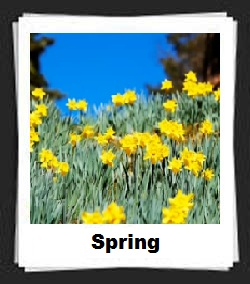 100 Pics Spring Answers