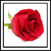 100 Pics Valentine's Day Level 3