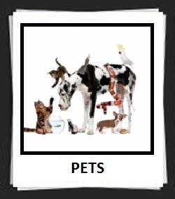 100 Pics PETS Answers