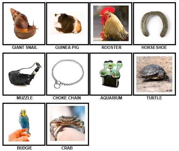 100 Pics Pets Answers 21-30
