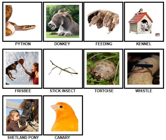 100 Pics Pets Answers 31-40