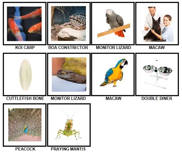 100 Pics Pets Answers 71-80