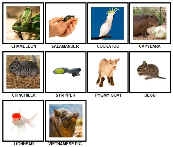 100 Pics Pets Answers 81-90