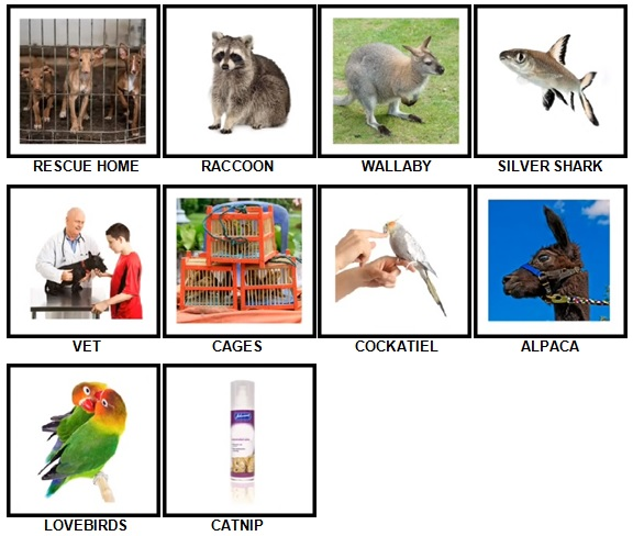 100-pics-pets-answers-level-61-70