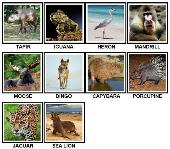 100 pics animals level 61 70 answers 100 pics answers