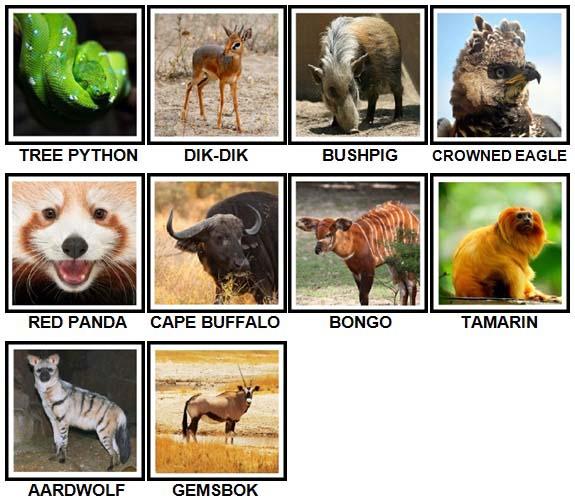 100 Pics Animals Level 91-100 Answers | 100 Pics Answers