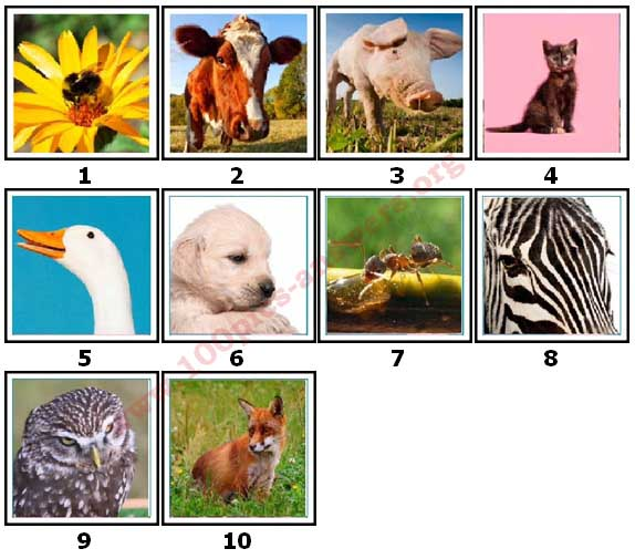 100 Pics Animals Level 1 Answers