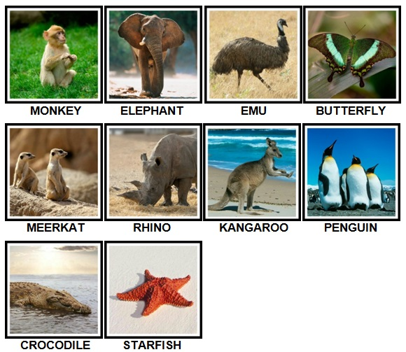 100 Pics Animals Level 21-30 Answers
