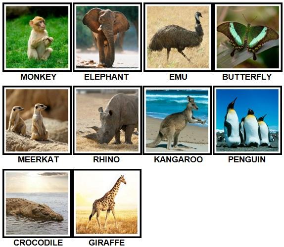 100 Pics Animals Level 21-30 New Answers 2