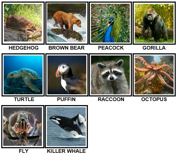 100 Pics Animals Level 31-40 New Answers