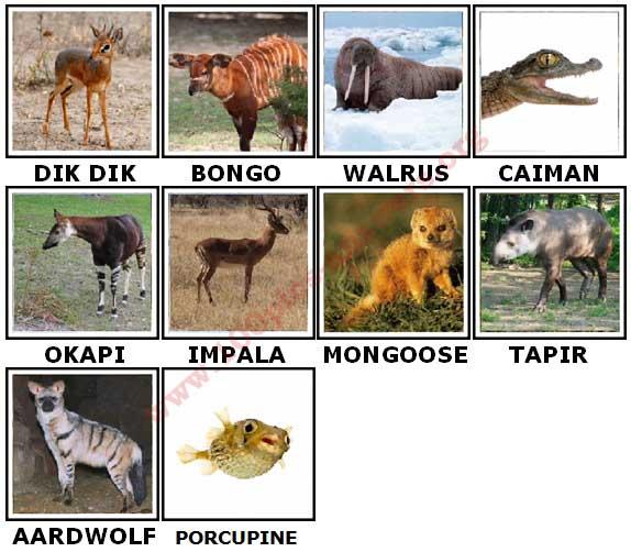100 pics animals level 84