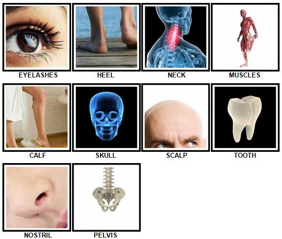 100 Pics Body Parts Answers 31-40