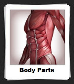 100 Pics Body Parts Answers
