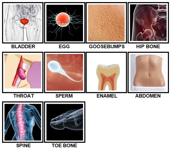 100 Pics Body Parts Level 61-70 Answers