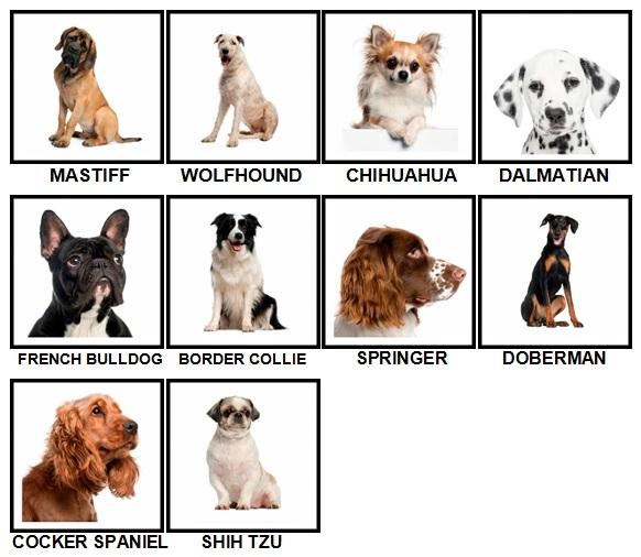 100 Pics Dog Breeds Level 21-30 Answers