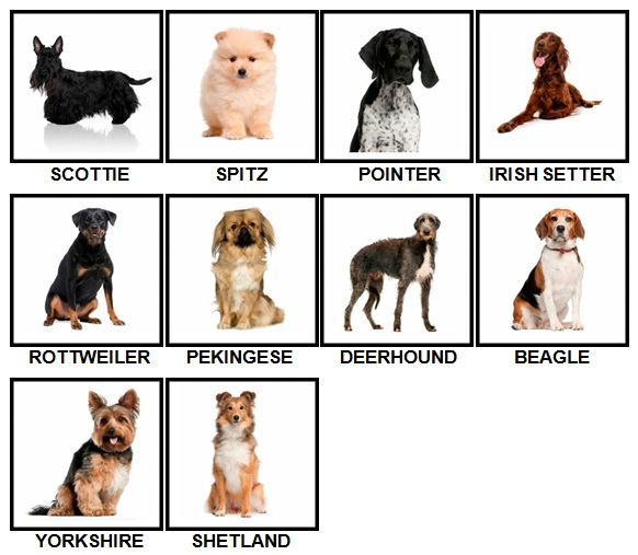100 Pics Dog Breeds Level 31-40 Answers