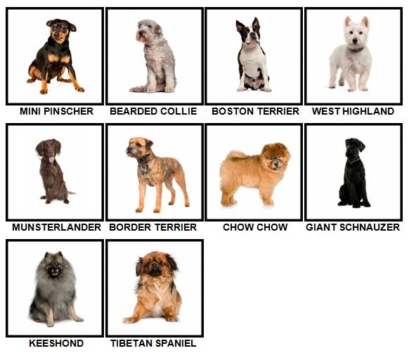 100 Pics Dog Breeds Level 51-60 Answers