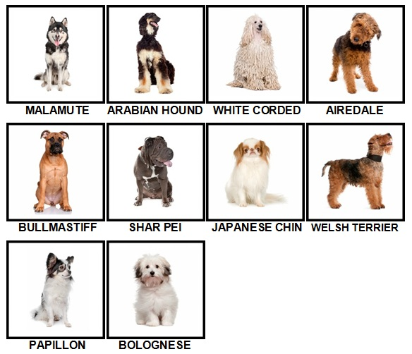 100 Pics Dog Breeds Level 61-70 Answers