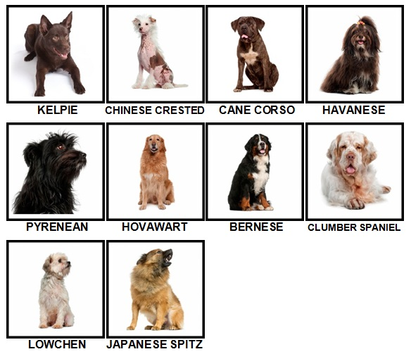 100 Pics Dog Breeds Level 81-90 Answers