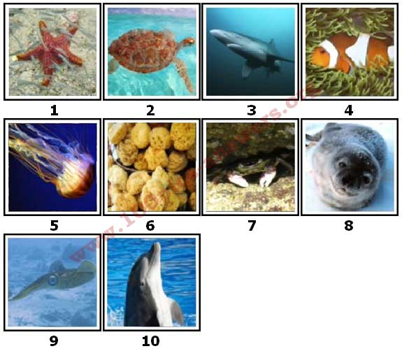 100 Pics Sea Life Level 1 Answers