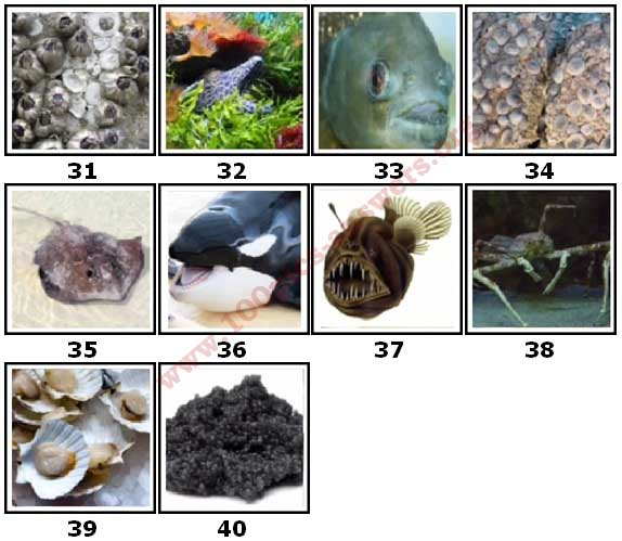 100 Pics Sea Life Level 31 Answers
