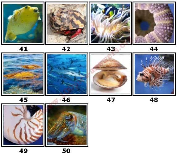 100 Pics Sea Life Level 41 Answers