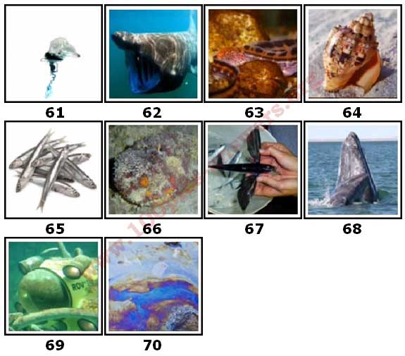 100 Pics Sea Life Level 61 Answers