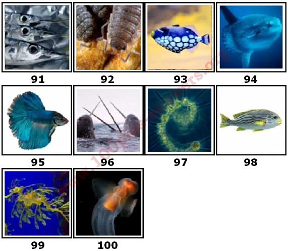 100 Pics Sea Life Level 91 Answers