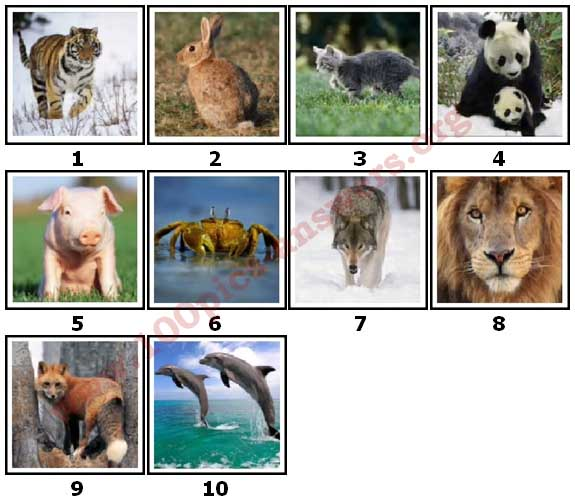 100 Pics Animal Planet Level 1 Answers