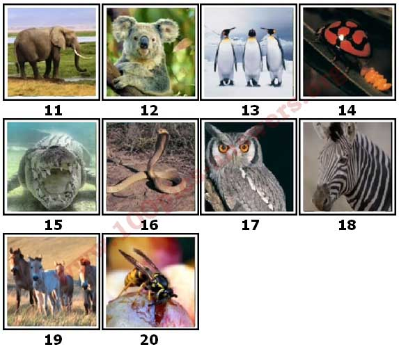 100 Pics Animal Planet Level 11 Answers