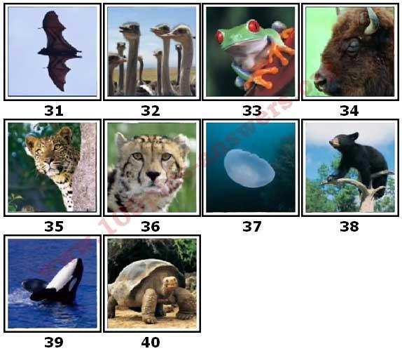 100 Pics Animal Planet Level 31 Answers