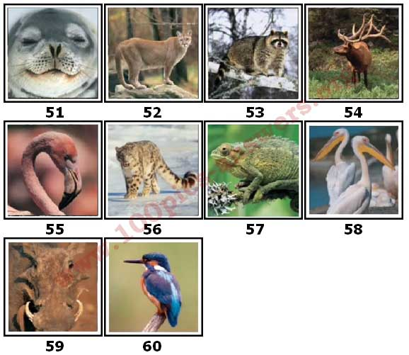 100 Pics Animal Planet Level 51 Answers