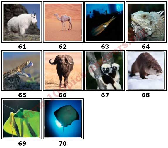 100 Pics Animal Planet Level 61 Answers