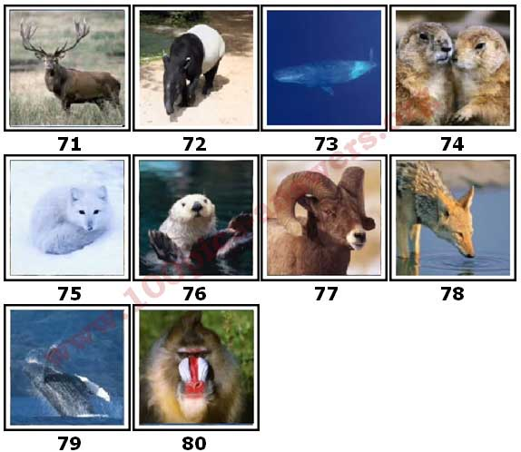 100 Pics Animal Planet Level 71 Answers