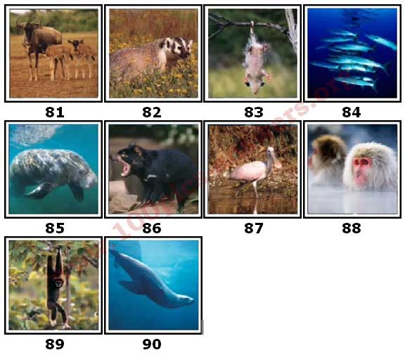 100 Pics Animal Planet Level 81 Answers