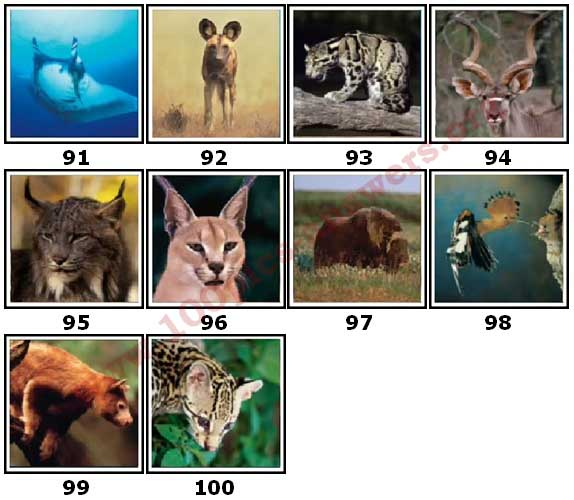 100 Pics Animal Planet Level 91 Answers