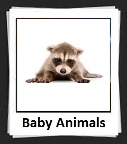 100 Pics Baby Animals Answers